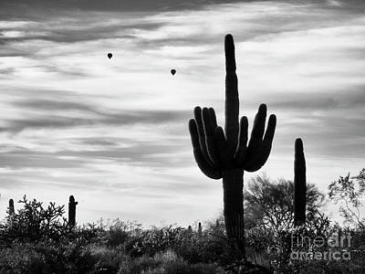 Photograph - Saguaro Cactus With Hot Air Balloons by Tamara Becker