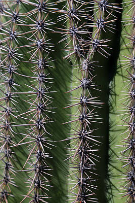 Photograph - Saguaro Closeup by Mary Bedy