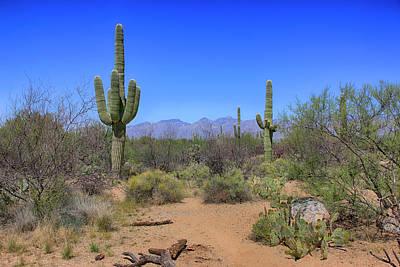 Katharine Hepburn - Saguaro Desert Scene by Chris Smith