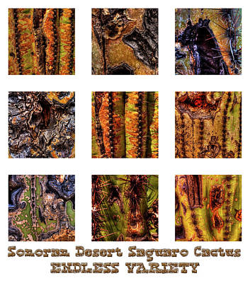 Photograph - Saguaro Detail Endless Variety by Roger Passman