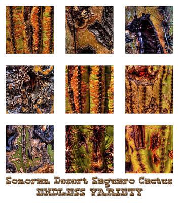 Mixed Media - Saguaro Detail Endless Variety by Roger Passman