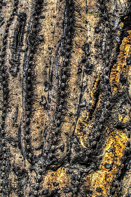 Photograph - Saguaro Detail No. 11 by Roger Passman