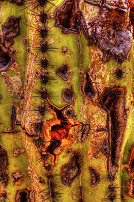 Photograph - Saguaro Detail No. 13 by Roger Passman