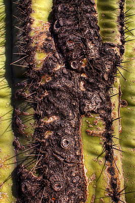 Photograph - Saguaro Detail No. 17 by Roger Passman
