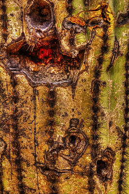 Photograph - Saguaro Detail No. 18 by Roger Passman