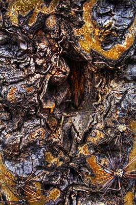 Photograph - Saguaro Detail No. 19 by Roger Passman