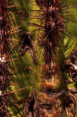 Photograph - Saguaro Detail No. 21 by Roger Passman