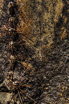 Photograph - Saguaro Detail No. 22 by Roger Passman