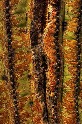 Photograph - Saguaro Detail No. 23 by Roger Passman