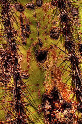Photograph - Saguaro Detail No. 25 by Roger Passman