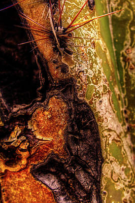 Photograph - Saguaro Detail No. 27 by Roger Passman