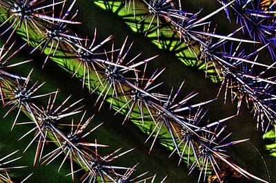 Photograph - Saguaro Detail No. 28 by Roger Passman
