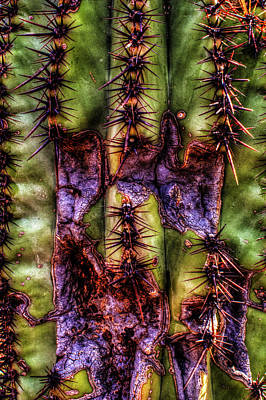 Photograph - Saguaro Detail No. 30 by Roger Passman