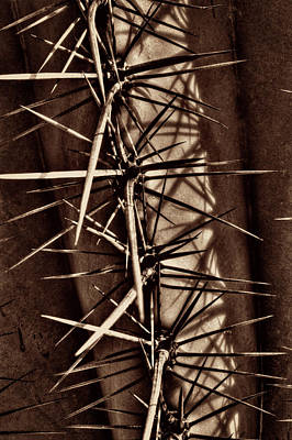 Photograph - Saguaro Detail No. 32 by Roger Passman