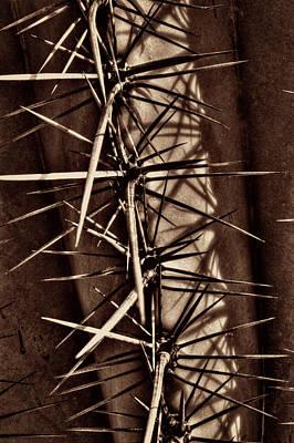 Photograph - Saguaro Detail No. 32 by Roger Passman