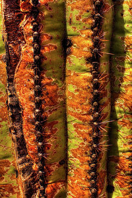 Photograph - Saguaro Detail No. 6 by Roger Passman
