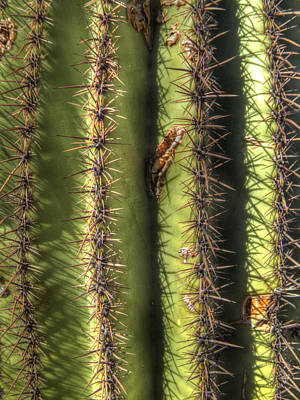 Photograph - Saguaro Detail No. 1 by Roger Passman