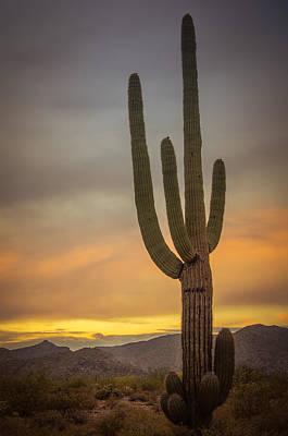 Photograph - Saguaro by Don Schwartz