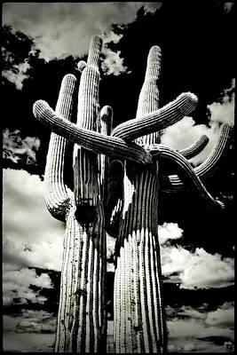 Photograph - Saguaro Embrace by Roger Passman