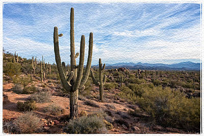 Photograph - Saguaro Fields by Dennis Eckel