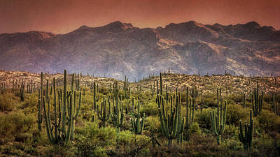 Photograph - Saguaro Forest Sunset  by Saija Lehtonen