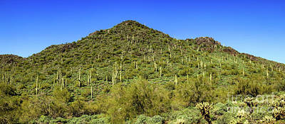 Photograph - Saguaro Hillside by Robert Bales