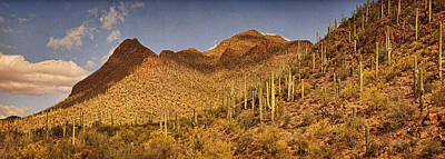 Photograph - Saguaro Hillsides Text by Theo O'Connor