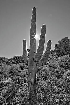 Photograph - Saguaro in the Sun by James Jones
