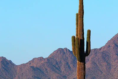 Photograph - Saguaro by Jon Emery
