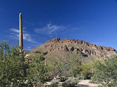 Photograph - Saguaro Landscape by Jim DeLillo