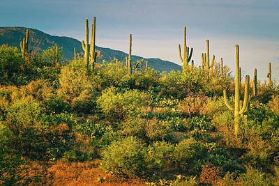 Photograph - Saguaro Landscape Series L9250085 by Sandra Selle Rodriguez