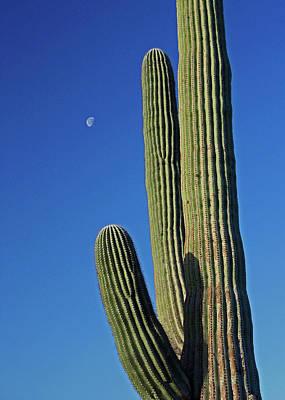 Photograph - Saguaro Moon by Lon Dittrick