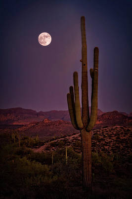 Photograph - Saguaro Moonlight  by Saija Lehtonen