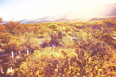 Photograph - Saguaro Morningrise II by Will Jacoby Artwork