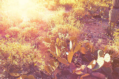 Photograph - Saguaro Morningrise IIi by Will Jacoby Artwork