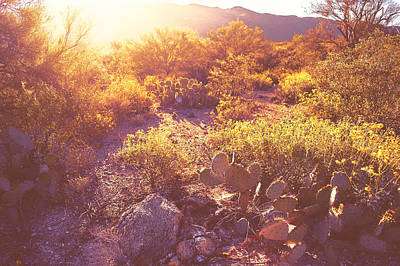 Photograph - Saguaro Morningrise Iv by Will Jacoby Artwork