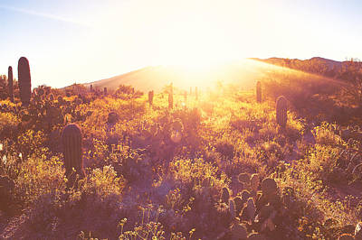 Photograph - Saguaro Morningrise by Will Jacoby Artwork