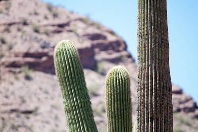 Photograph - Saguaro Movie Nostalgia by Carolina Liechtenstein