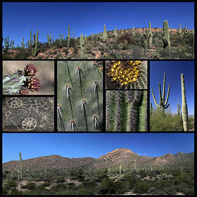 Photograph - Saguaro National Park Black Background by Mary Bedy
