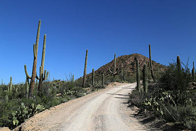 Photograph - Saguaro National Park Landscape 2 by Mary Bedy