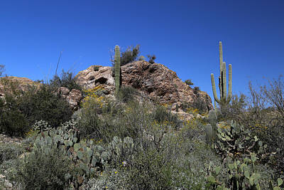Photograph - Saguaro National Park Landscape 4 by Mary Bedy