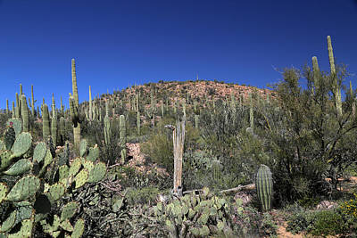 Photograph - Saguaro National Park Landscape  by Mary Bedy