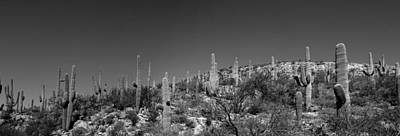 Photograph - Saguaro National Park Panorama 1 Bw by Mary Bedy