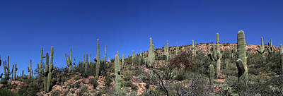 Photograph - Saguaro National Park Panorama 1 by Mary Bedy
