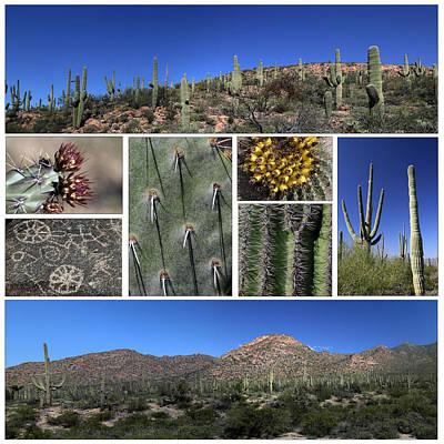 Photograph - Saguaro National Park White Background by Mary Bedy