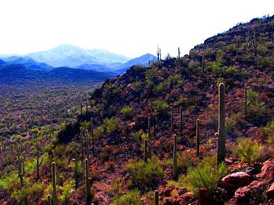 Photograph - Saguaro National Park Winter 2010 by Michelle Dallocchio