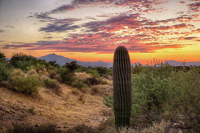 Photograph - Saguaro On Ridge by Charlie Alolkoy