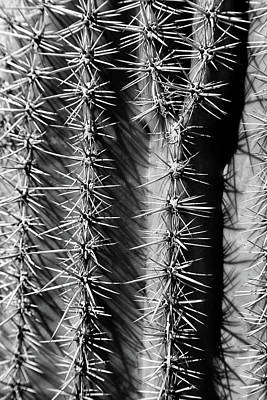 Photograph - Saguaro Portrait 2 Bw by Mary Bedy