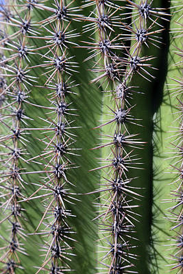 Photograph - Saguaro Portrait 2 by Mary Bedy