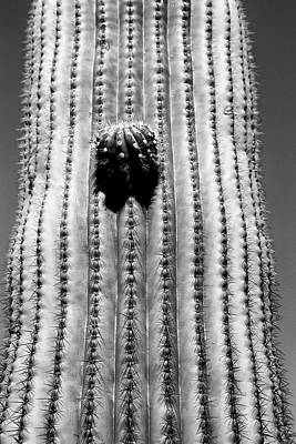 Photograph - Saguaro Portrait Bw by Mary Bedy